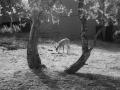 shr2012Art-Tony Coluzzi-FawnandTrees