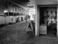 shr2012Art-Tony Coluzzi-StanfordBarnwithGirlandHorse